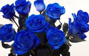le_rose_blu